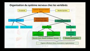 2020-2021_Physiologie_Animale1_Presentation_generale_SN