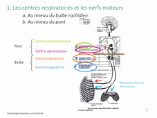 Physiologie animale 2 La Respiration